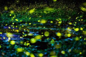 Flireflies-in-the-woods-min