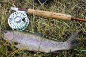 rainbow-trout-609551_1920-min