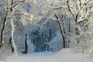 winter-343512_1920-min
